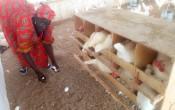 Ande Souxali - Ensemble pour le développement