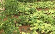Mbokator Njalik - Pour un avenir meilleur
