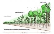La madurez del ecosistema, la estabilidad y profundidad del suelo incrementan con el tiempo aplicando la Forestería Análoga