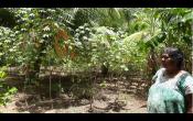 Durante la pandemia COVID-19, las mujeres con jardines forestales se sienten resistentes a las condiciones climáticas y económicas adversas y aportan alimentos a la comunidad